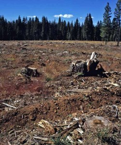 Plumas National forest Clear cut